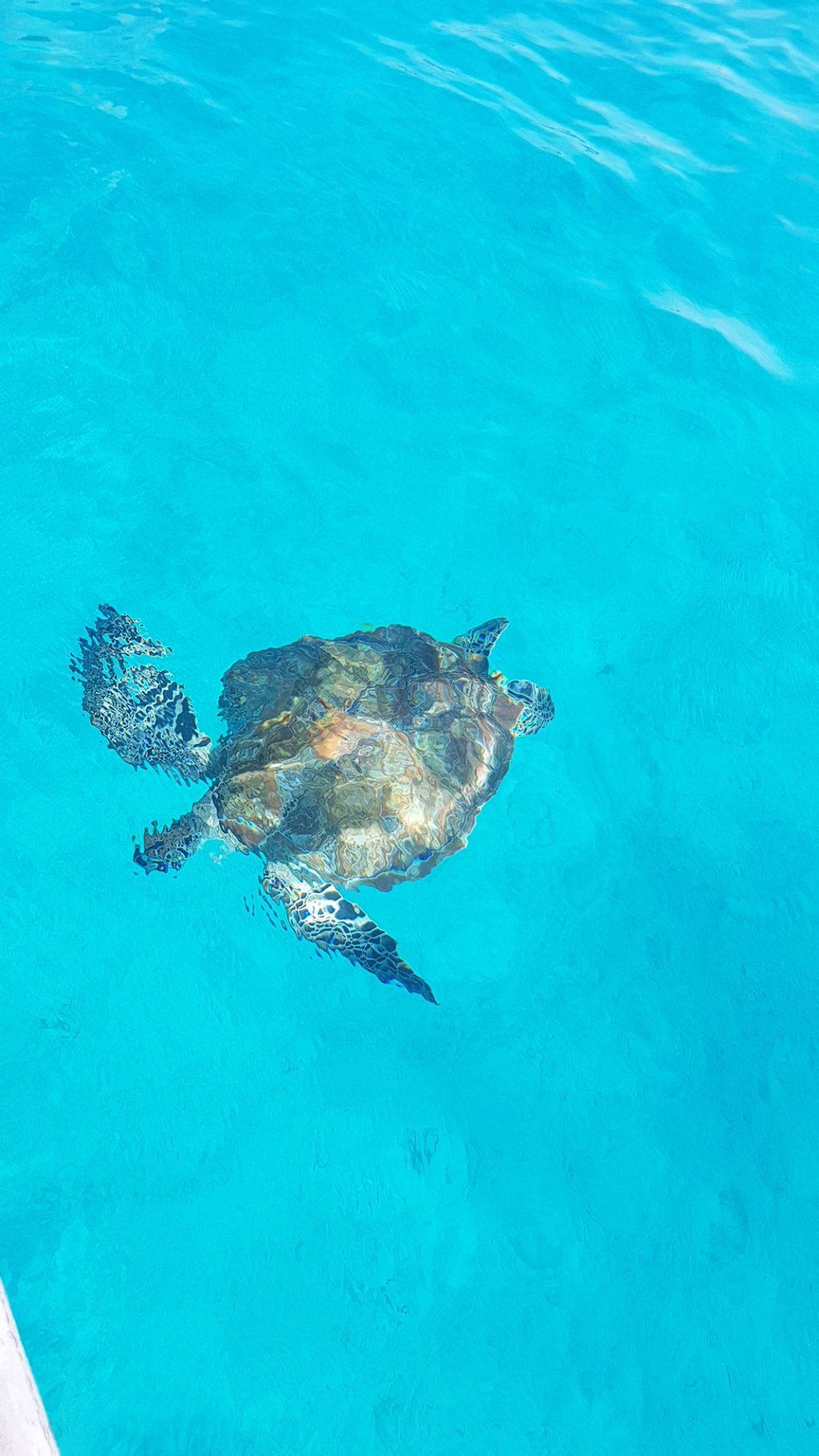 Redang tortue turtle